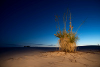 0171 White Sands Yucca Before Dawn